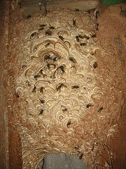 Wasps Nests Destroyed