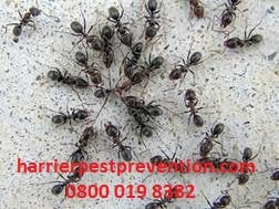 ant-infestation-in-crawl-space